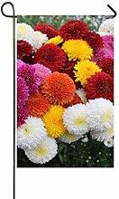 hongwei ChrysanthemumMargaretCollection