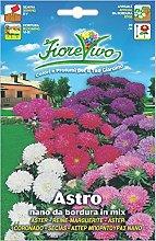 Hortus 60SDFA134 Fiorevivo Astro da Bordura, Nano,