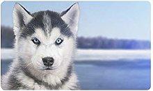 Husky Dog in Bianco e Nero in Snow River Zerbino