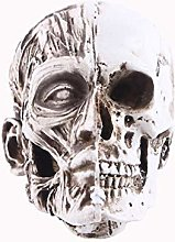 HXXyoga Statua della forma del cranio del cranio