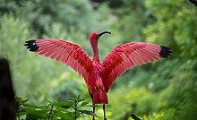 Illustrazione Animale Uccello Ibis Puzzle In Legno