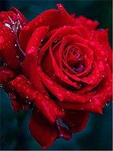 Lausra Kit Pittura Diamante 5D Rosa Rossa Fai da
