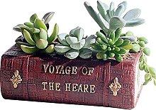 Libro A Perma Di Succulente Vaso Con Fori