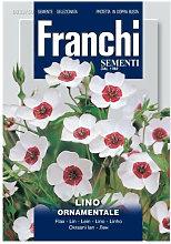 Lino ornamentale (Linum) (Semente)