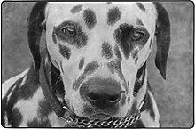 MALPLENA - Tappeto per cani dalmata, per