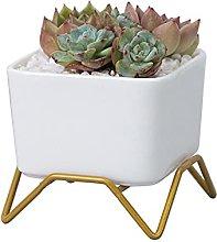 Mini Ceramica Vaso Succulento,Rettangolo