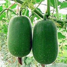 Mini semi di melone invernale, nutrizione e