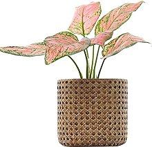 Moderno Cemento Vasi Per Piante,Rattan Motivo Di