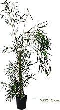 OnlyMoso Pianta di bambù Fargesia - Vaso 12 cm