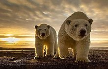 Orso Polare Al Tramonto Puzzle In Legno 98 Pezzi