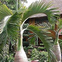 P12cheng - Pianta da semi di palma, 50 pezzi, per