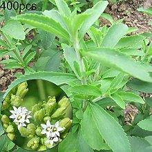 P12cheng - Pianta di semi di Stevia, 400 pezzi,