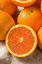 pianta di arancio Navelina albero di arancia