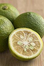 pianta di limone albero di limone in vaso pianta