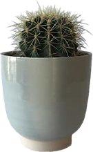 Pianta Echinocactus in Vaso di Ceramica