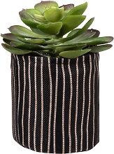 Pianta grassa artificiale con vaso nero a righe