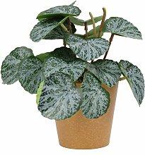 Piante artificiali, piante verdi artificiali,