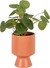 Pilea artificiale con vaso in ceramica terracotta