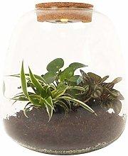 Plant Puzzle ® Discover the World Ecosystem con