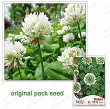 Potseed 250 Semi/Pack, Trifoglio Bianco Semi, Vaso