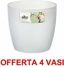 PRG Offerta 4 Vaso Orchidee Brussels Orchid 12,5CM