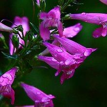 Quattro stagioni pianta facile semi di fiori vivi