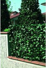 Recinzione in Pvc con foglie Lauro pi