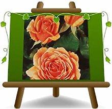 Rosa a Cespuglio Muria Arancio Grandi Fiori su