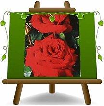 Rosa a Cespuglio Rosso Geranio Grandi Fiori su