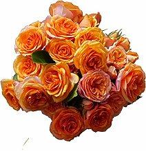 Rose in vaso balcone giardino multi-stagione