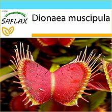 SAFLAX - Confezione regalo - Venere