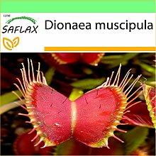 SAFLAX - Venere acchiappamosche - 10 semi -