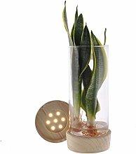 Sanserveria in Vetro Cilindro + LED - Altezza 25 -