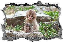Scimmia, 3d, adesivo, wall art, adesivo, carino,