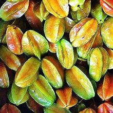 Semi 20pcs Carambola Star Seeds frutta semi