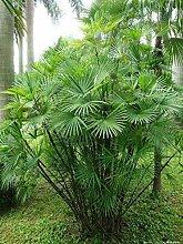 Semi di piante con fogliame sempreverde Semi di