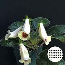 Semi per la piantagione, 50 pz/sacchetto White