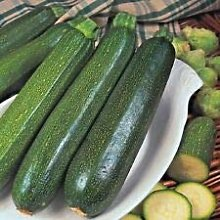 Semi - Vegetale Zucchine Verde Cespuglio 25 Semi