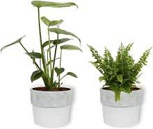 Set di 2 piante da interni – Nefrolepis Vitale &