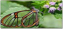 Tappeto Passatoia Farfalla foglia verde 50cm X