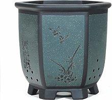 TBUDAR Vasi di Fiori Clivia Indoor Medium Vaso di