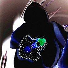 TENGGO Egrow 100pz Semi di Orchidea Nera Rara