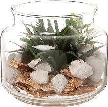 Terrario rotondo in vetro e pianta grassa
