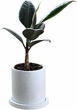 Vaso di fiori Pentola di fiori, pentola di piante