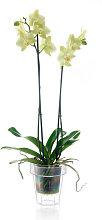 Vaso trasparente per orchidee PORTO Ø16 -