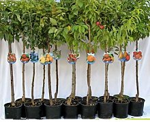 vivaiosantabernadetta pianta Piante da frutto a