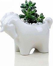 Wlnnes Cavallo creativo ceramica succulente