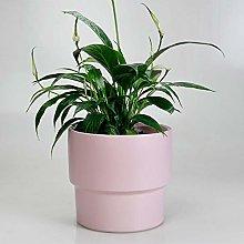 Wlnnes Flowerpot della piantatrice di erbe,