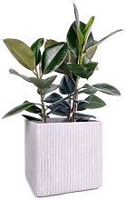 XlBoom Mon Vaso Quadrato