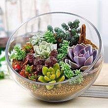 XQxiqi689sy - 100 piante rare miste per piante